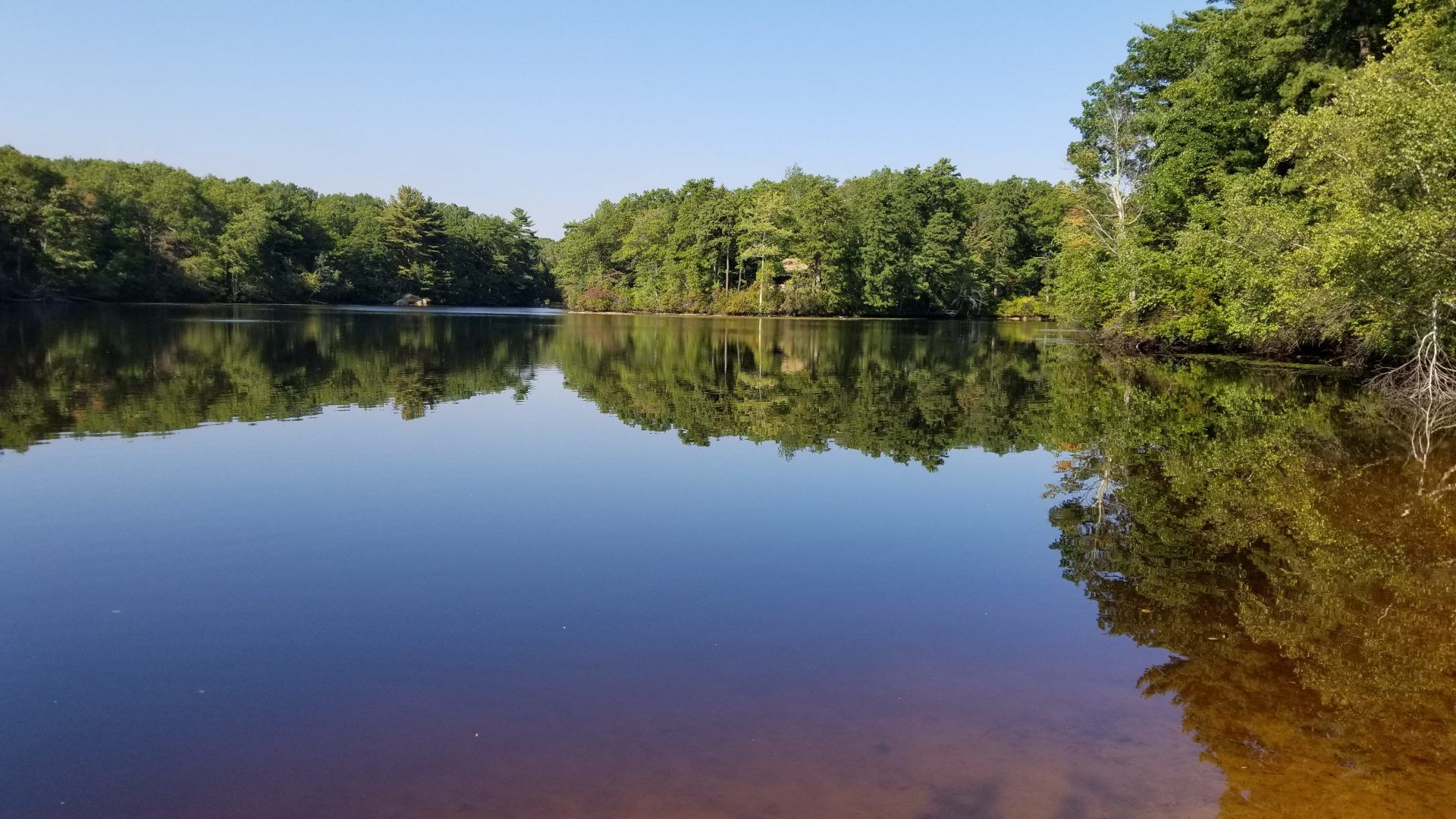 Powissett pond fishing hale reservation dover for Public fishing access near me
