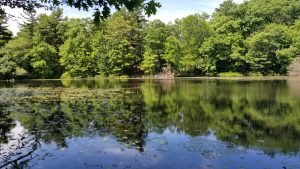 Quarter Mile Pond Fishing - Medford, Stoneham - MA